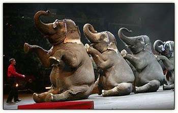 Circus_elephants
