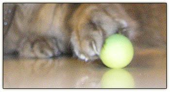 Tiny_paw_ball