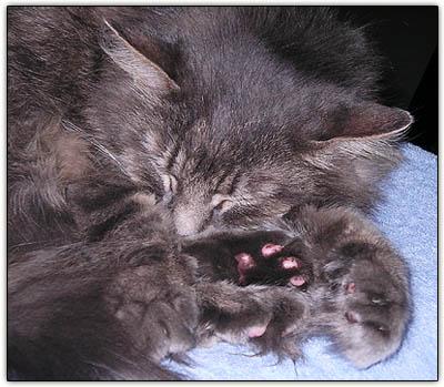Sleepybabypaws