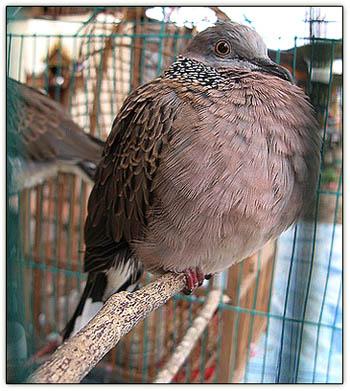 Bird_puff