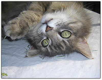 Tiny_crazycat