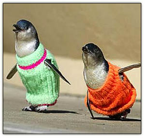 Penguins_in_sweaters