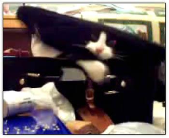 Suitcase_cat