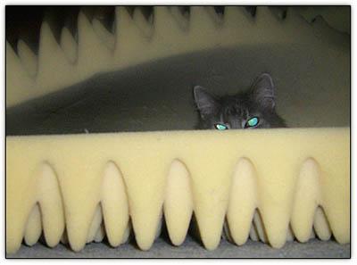 Tiny_mattresses