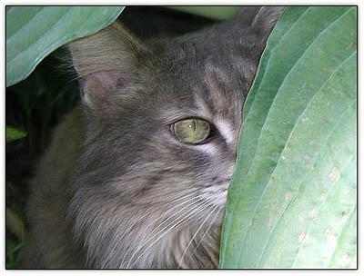 Tiny_leaf_peering2