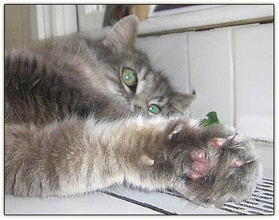 Tiny_catnip_haze