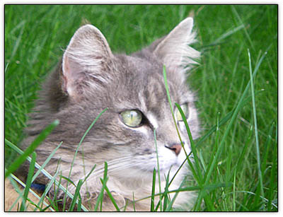 Tiny_in_grass