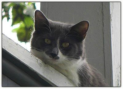 Balcony_kitty
