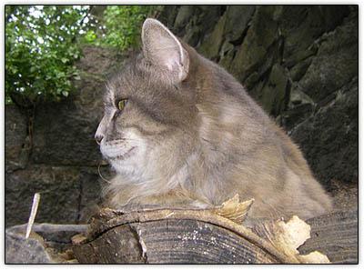Tiny_woodpile_profile
