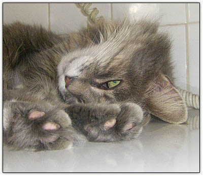 Tiny_furball_toes2