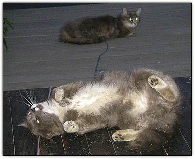 Catnip_animals