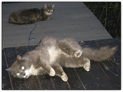 Catnip_animals2