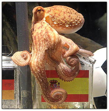 Paul_the_octopus
