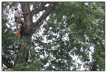 Tree_monkey