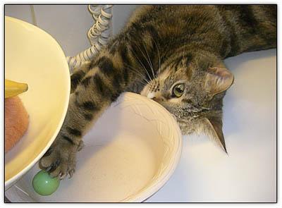 Littlecat_paw_bowl