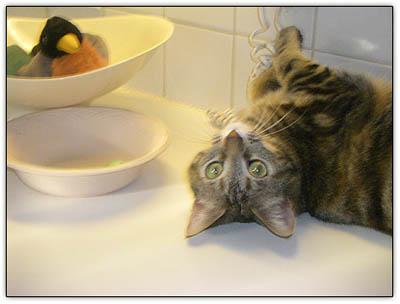 Littlecat_upside_down