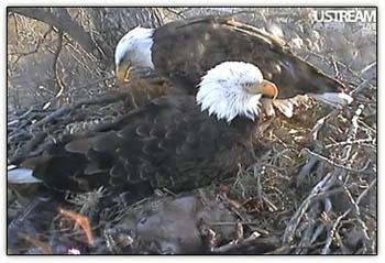 Eagles_sunrise