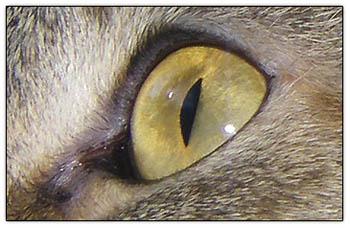 Crazy_cat_eye