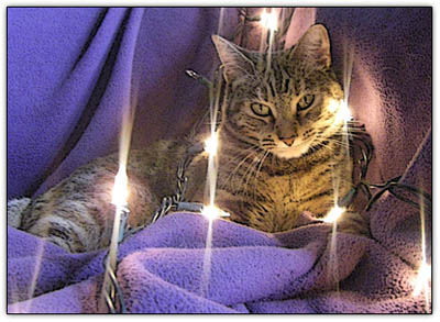 Little_kitteh_lights