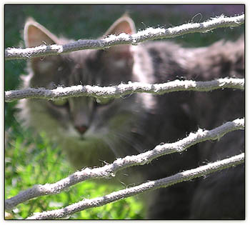 Tinycatscradle2
