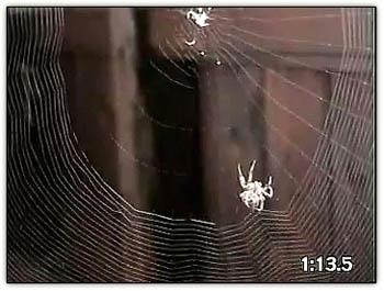 Spiderwebmoviestill