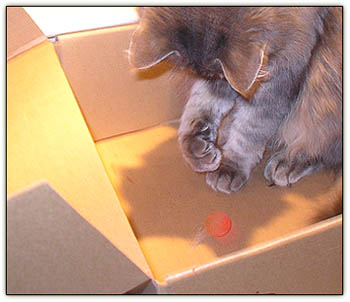 Tinyboxball3