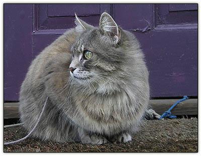 Tinyguardcat2