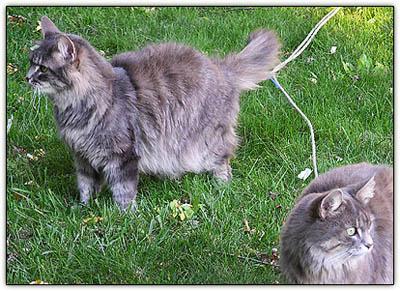 Turfcats2