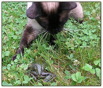 Purkyandfrog2