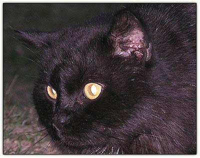 Blackcatintruder