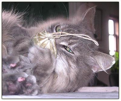 Tinycatnipeyes
