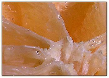 Grapfruitjuicy5