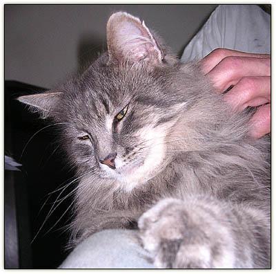 Babu_lap_cat