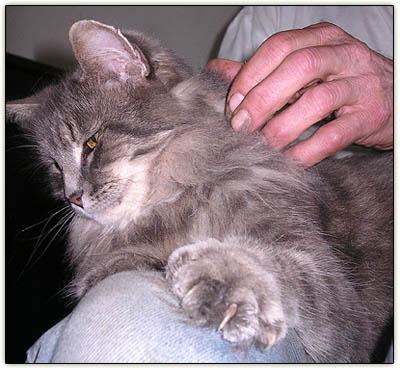 Baby_lap_cat2