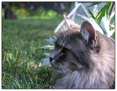 Lawn_cats3