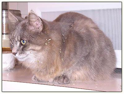 Tiny_catnip_glaze