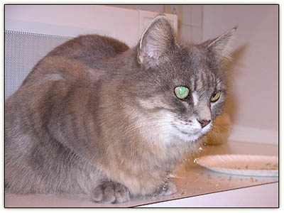 Tiny_catnip_stupor