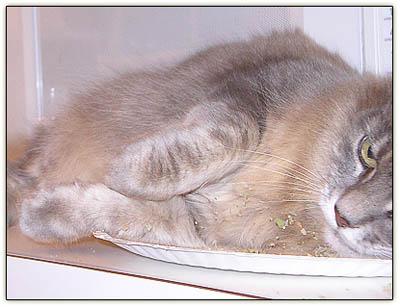 Tiy_catnip_plate