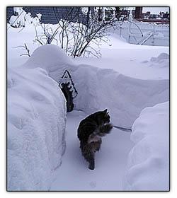 Kitty_play_yard