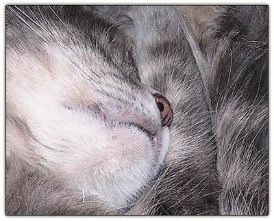 Babynapnose