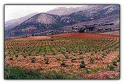 Bekaavalleyagriculture