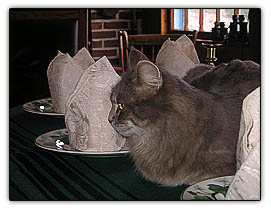 Catnapkinears