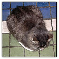 Catnipbaby