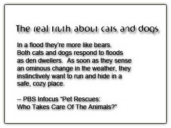 Catslikebears2