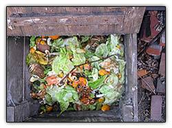 Compost2_1