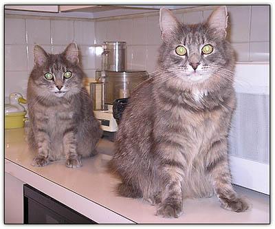 Countercats2_1