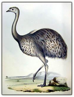 Darwinrhea