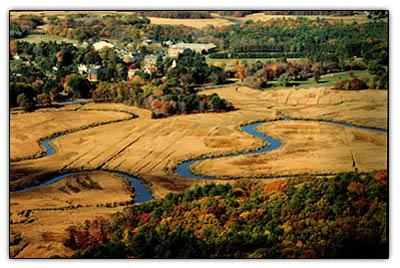 Marshtream