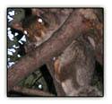 Poorlittlesquirrel