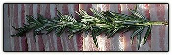 Rosemarybacon2
